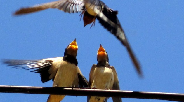 Aves - Rosa Arribas - Alegria y nervios por un bocado