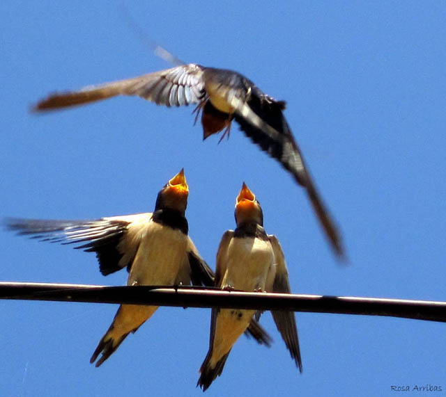 Aves - Alegria y nervios por un bocado