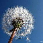 Flora - Esperando un soplo de viento