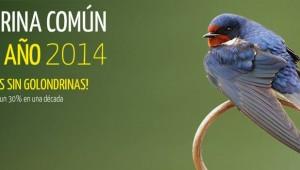 Golondrina Ave del Año 2014
