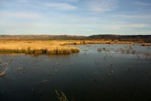 Laguna de Meco. Autor: Víctor Noguerales
