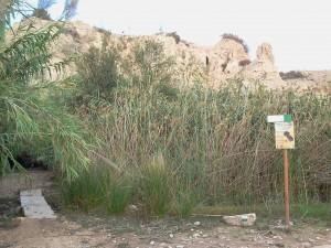 Paisaje en el que se encuentra la estación de anillamiento Riu Montnegre. Autor: Cristian Pérez