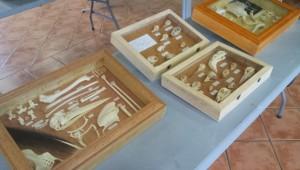 Muestra de la Exposición de plumas y esqueletos de Navalafuente. Autora: Natalia Rojas.